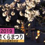 3月31日のさくら開花情報【夜のさくらまつりと水尾公園】