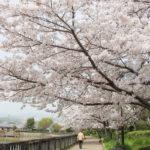桜をみながら、散歩も遊びも楽しめる「耳原公園」